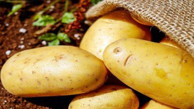 Photo of سوريا توقف تصدير البطاطا