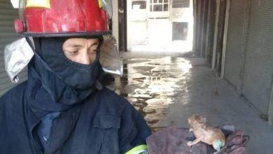 Photo of رجال إطفاء يحاولون إنقاذ قطة صغيرة محاصرة بالنيران بدلالة أمها بحلب